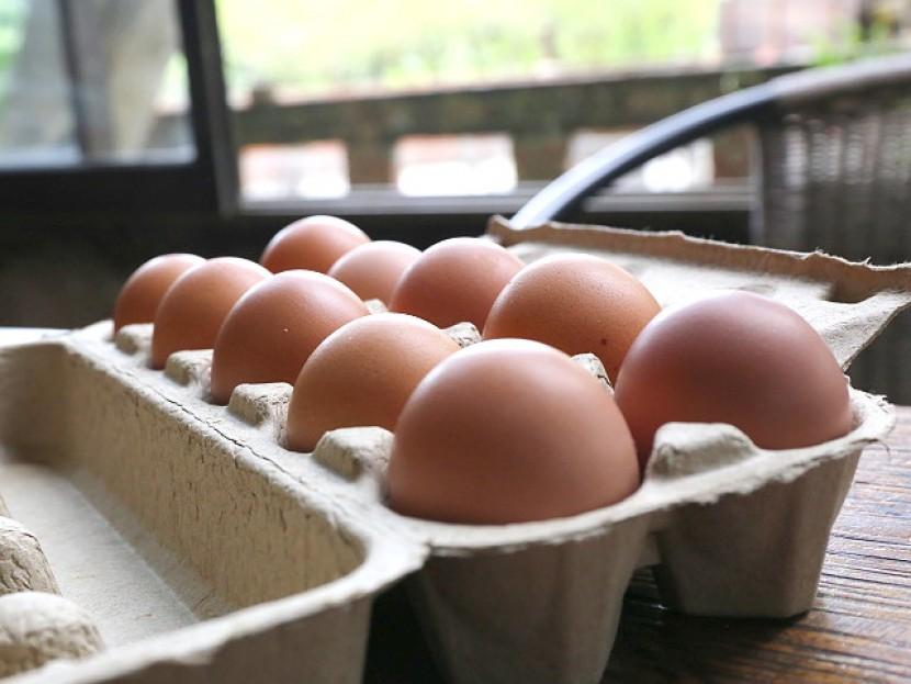 雞蛋-10顆裝-1