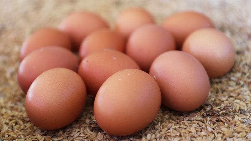 濃、純、Q彈的放牧土雞蛋